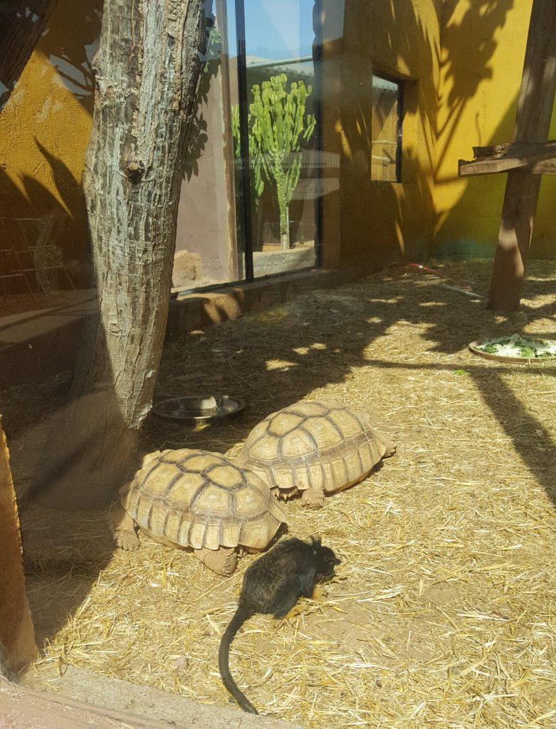 real turtles