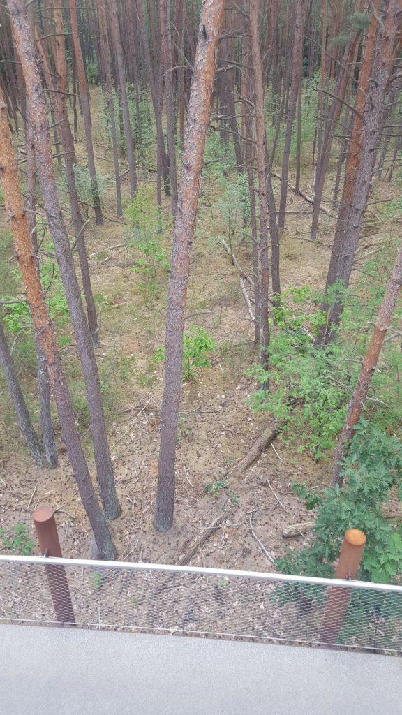 wandelen door de bomen
