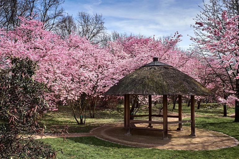Spring in Japanese garden!